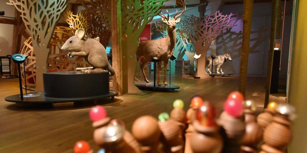 Blick in die Ausstellung. Foto Eliane Huber, Naturmuseum